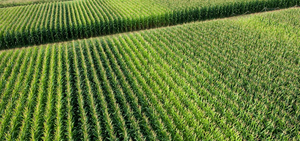 Sistemi di digital farming per le colture a campo pieno