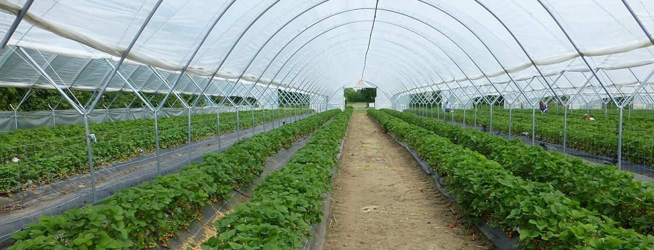 Sistemi di digital farming per le serre